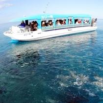 【かりゆしビーチ】グラスボートでは様々な熱帯魚に出会えます