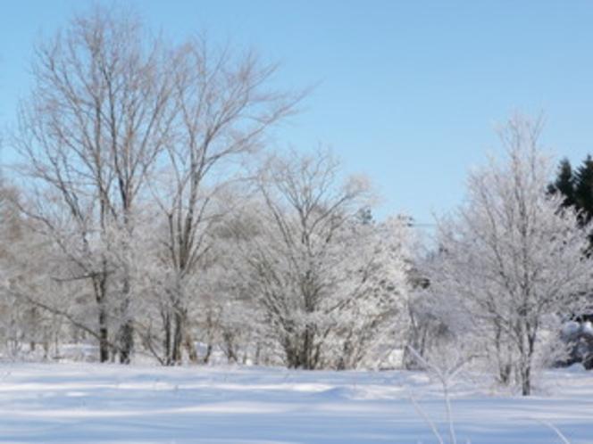 美留和の森の白銀の世界
