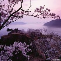 天空の城 竹田城跡(桜と霧)