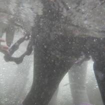 ネイチャープラン《シャワークライミング-3》