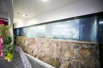 当館自慢の巨大水槽