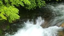 ◆ホテル前の景色/ニセコアンベツ川の渓流が。ニセコの森と空、空気に癒されます。