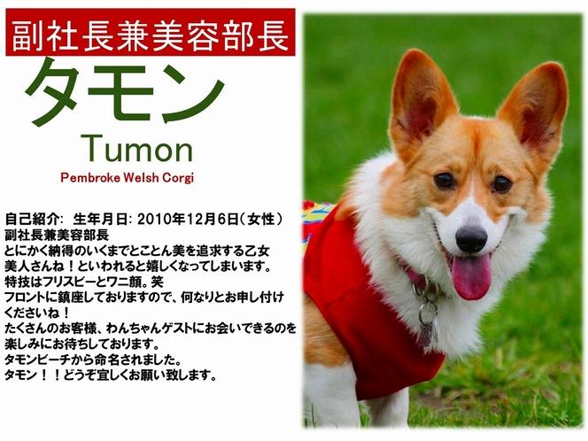 看板犬【タモン】