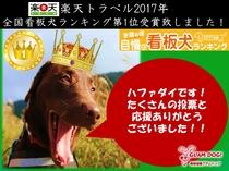 楽天トラベル2017 全国看板犬ランキングにて第1位になりました!