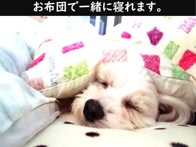 わんちゃんも一緒のお布団で添い寝ができます