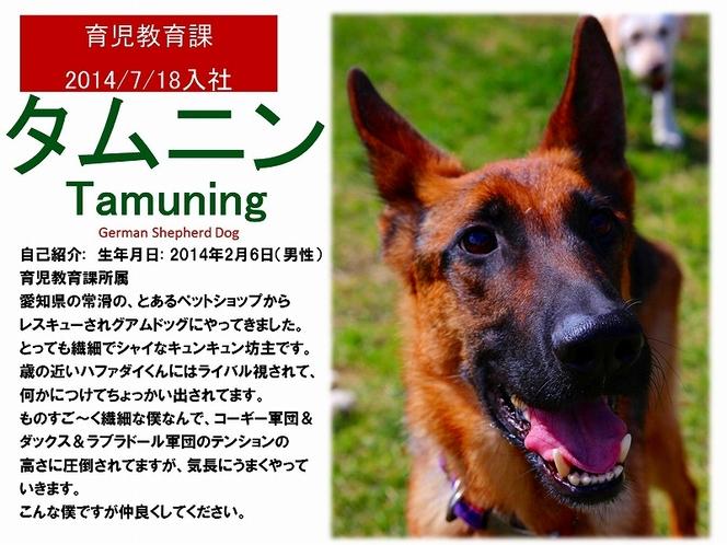 看板犬【タムニン】