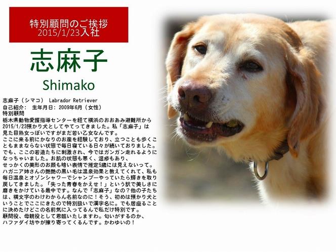 看板犬【志麻子】
