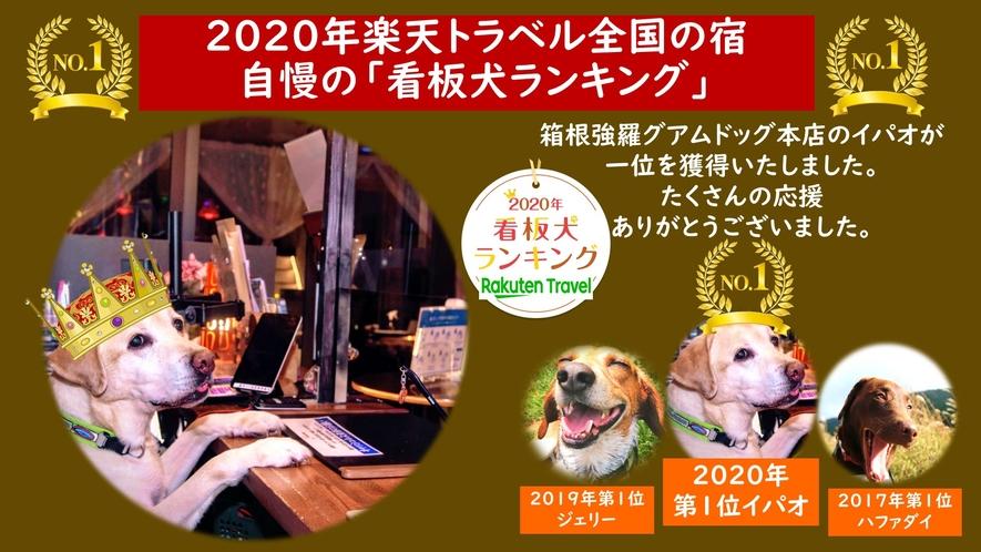 2020楽天トラベル 看板犬ランキングにて当館の「イパオ」が一位に選ばれました!