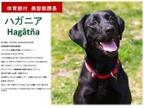 看板犬【ハガニア】