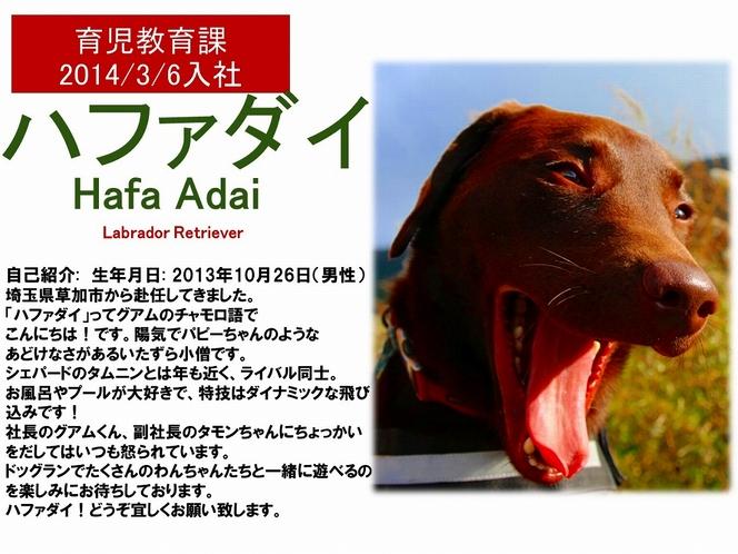看板犬【ハファダイ】