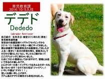 看板犬【デデド】