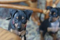 12-31 オーナー愛犬2