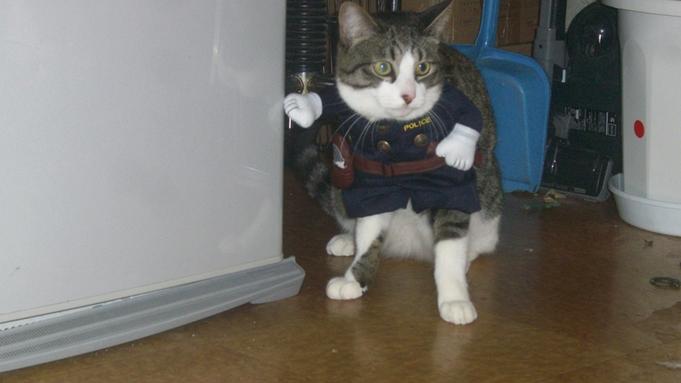 【素泊り】猫ちゃんとツーショット★幸せなひと時を写真に収めよう!