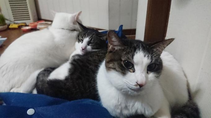 【素泊り】ペットと泊まれる★特別な時間をペットと一緒に!1日1室、広々30畳