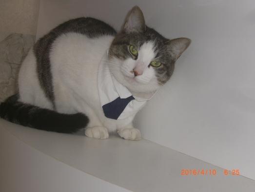 【たまHOTEL 】猫ちゃん大好き!!ツーショット記念写真・・素泊まりプラン