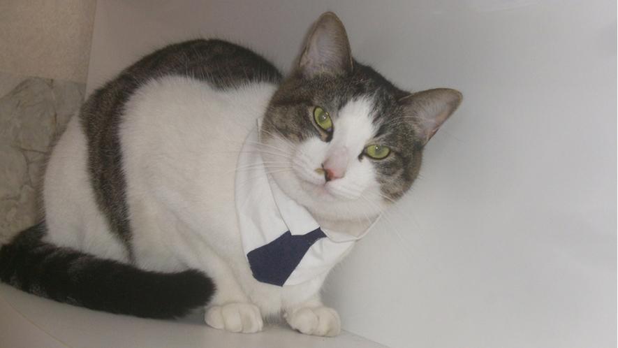 ・猫が経営している「癒し」が自慢のホテルです