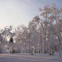 雪に輝くガーデン