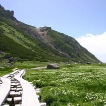 乗鞍岳 お花畑の小道