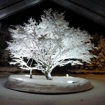 雪化粧のシンボルツリー