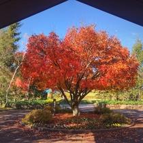 シンボルツリー(紅葉)