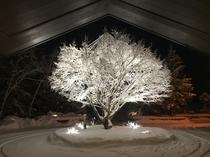 シンボルツリー楓(冬)トップページ用