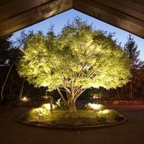 シンボルツリー(新緑・ライトアップ)