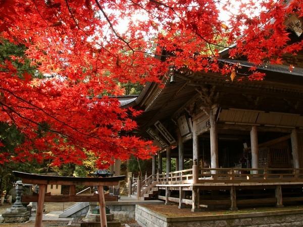 仲仙寺の紅葉