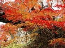 高遠城址の紅葉