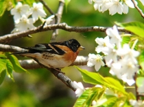 舳倉島の鳥2