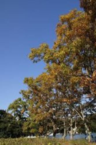 秋くぬぎ堤防縦位置