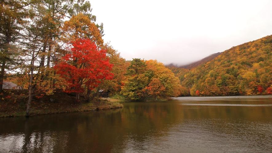 秋のフォレストスプリングス