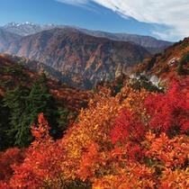 ■紅葉の「白山白川郷ホワイトロード」