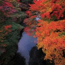 ■鶴仙峡の紅葉