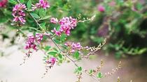 *【はぎ公園】はぎ乃湯の隣にある「はぎ公園」では、ピンク・紫・白の花が期間中楽しむことができます
