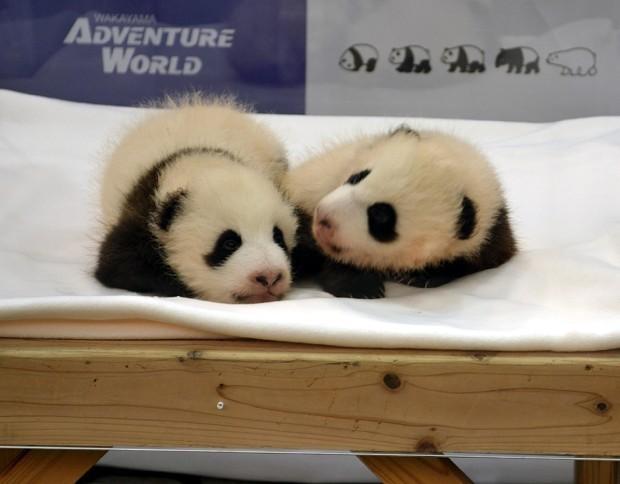 全国一のパンダ飼育施設:アドベンチャーワールド