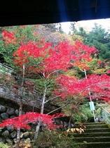 玄関先の紅葉