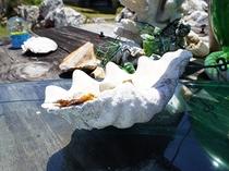 シャコ貝の灰皿でひといき