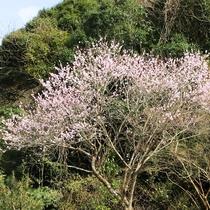 春には、山々に花が咲きほこり、四季折々の移ろう美しい情景もお楽しみいただけます。