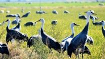出水市ツル観察センター:当館より車で約40分。ツル飛来時期に開館し大パノラマで鶴の舞を見る事ができる