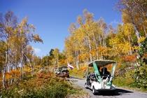 秋のカート道