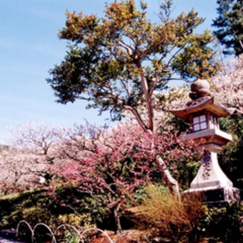 【中山寺】安産の観音様として各地からの参拝者で賑わう格式の高いお寺です。
