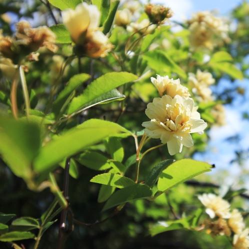 《遊歩道》移り変わる季節の植物をお楽しみ下さい。