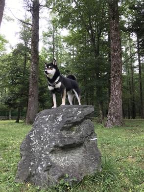 【さき楽】ペットと泊まれる♪ 早めの予約でお得に泊まる犬旅早割プラン♪