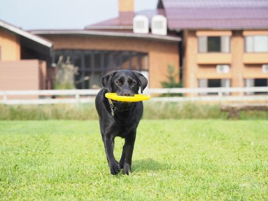 【シニア犬無料】広大なドッグランで若返り旅行!10歳以上のワンコは宿泊料無料!【現金特価】