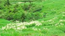 【お花畑コース】天空の別天地へ、大自然を感じてリフレッシュ!