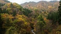 【紅葉の絶景スポットが数ある白布温泉】秋は一番人気の季節。写真撮影にも最適です。