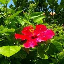 常夏の沖縄!10月までは海水浴も楽しめるベストシーズン!