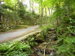 【周辺】新緑が眩しい大原の山道
