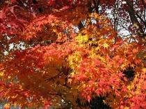 【周辺】三千院周辺の紅葉(2009年11月撮影)
