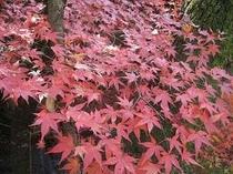 【周辺】三千院参道の紅葉